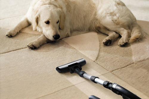 pet odor and stain removal service