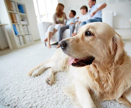 professional pet odor removal from carpets and floors